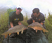 Common and mirror carps
