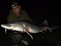 See fato59's sturgeon photo