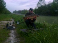 See titanus51's mirror carp photo