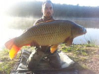 See Adedel03's common carp photo
